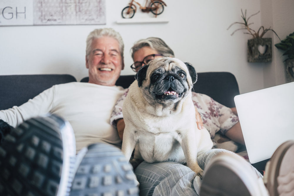 The benefits of living in a residential park home for dogs
